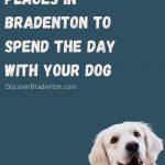 Pet Friendly Bradenton: A Fun Day With Your Furry Friend