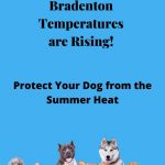 Bradenton's Temperatures are Rising: Protect Your Dog from the Heat