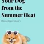 Protect Your Dog From Bradenton's Summer Heat