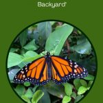 Palma Sola Botanical Park: Bradenton's Piece of Paradise