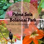 Palma Sola Botanica Park: A Piece of Paradise in Bradenton, FL