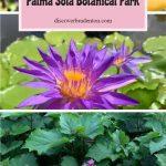 Palma Sola Botanical Park in Bradenton, FL.