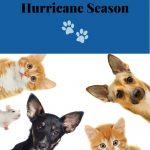 How to Prepare Pets for Hurricane Season