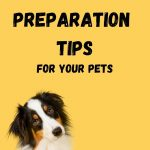 Hurricane Preparation Tips For Your Pets