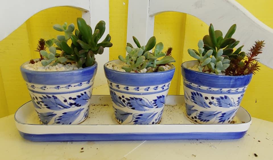 bradenton plants for sale