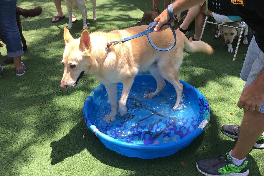 ziggy in pool