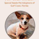Special Needs Pets Adoptions Bradenton, FL