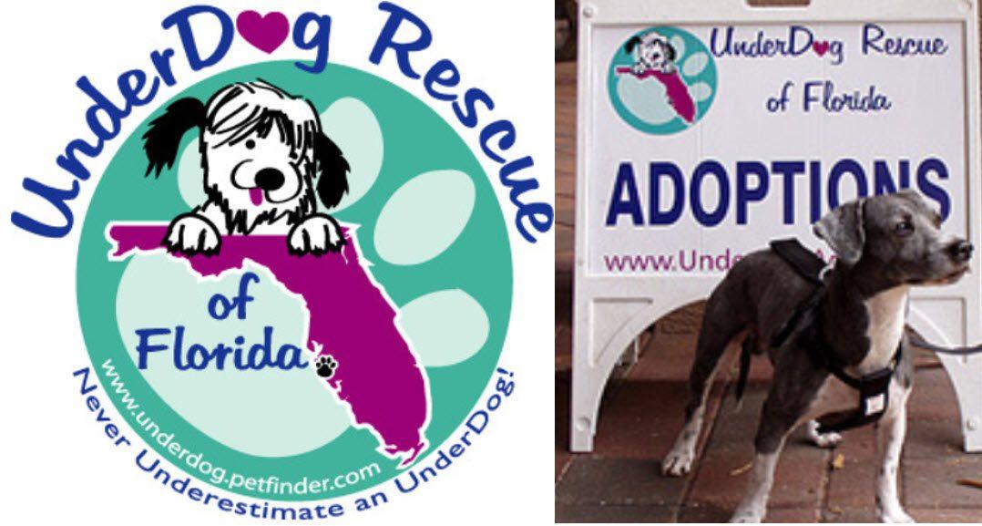 Yappy Hour for Underdog Rescue Bradenton