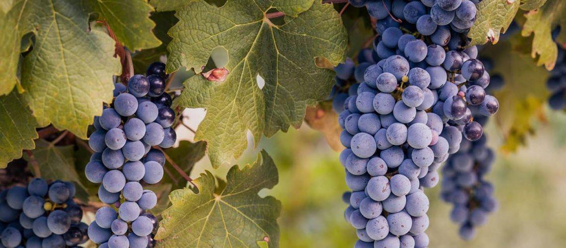 Fiorelli Winery Bradenton FL