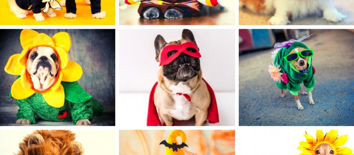 bradenton pet halloween contest