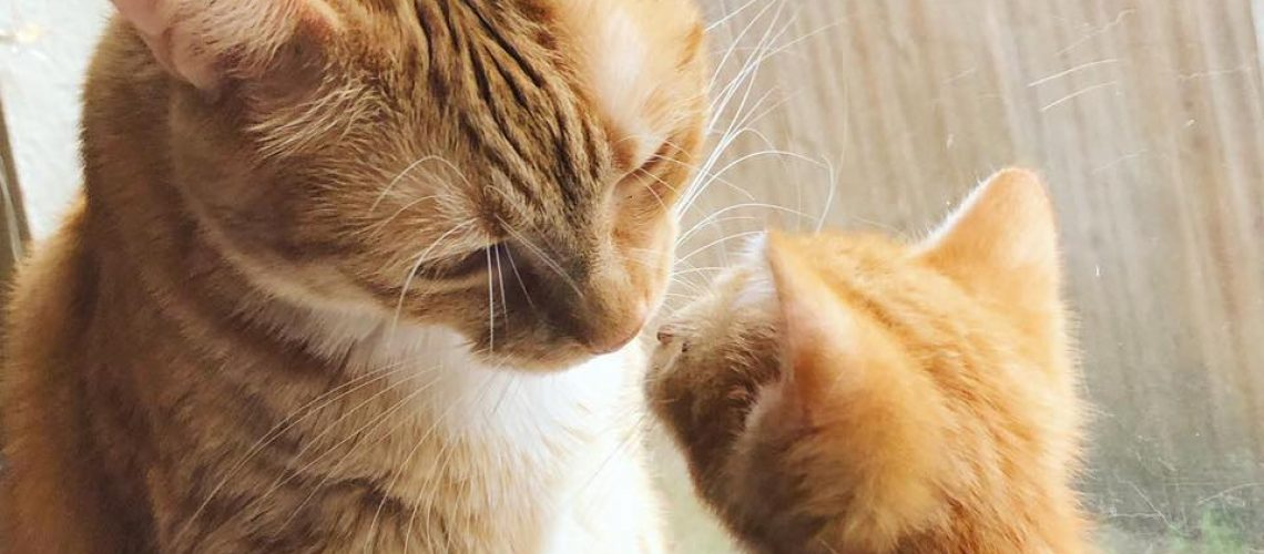 Special Needs Pet Adoptions Bradenton 4