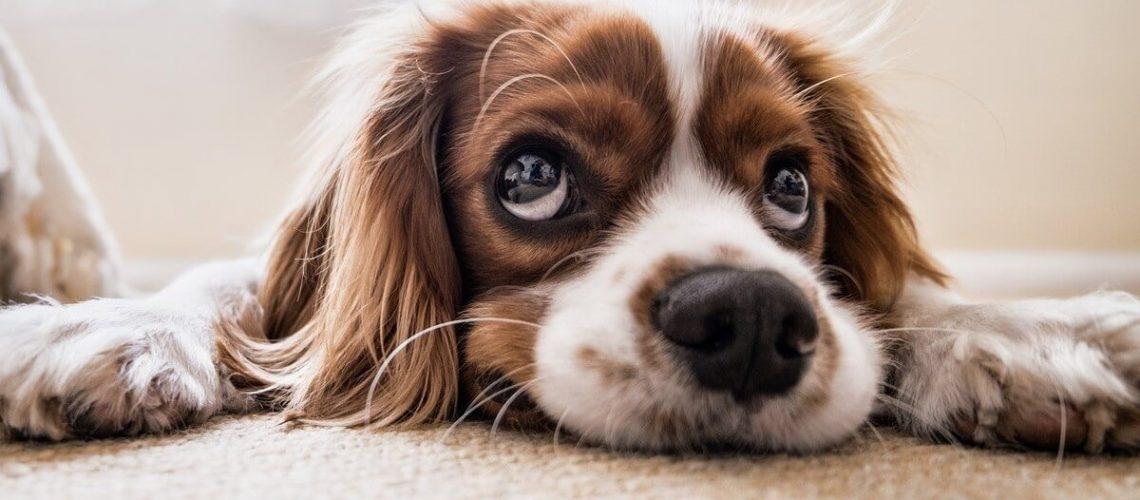 Protect your dog Bradenton summer
